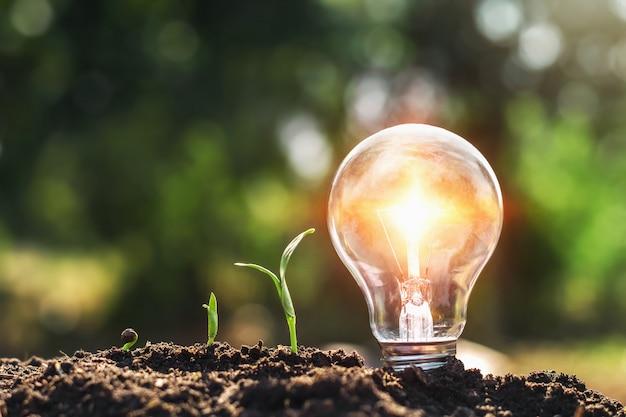 Ampoule sur le sol et jeune plant en croissance
