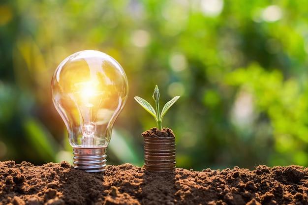 Ampoule sur le sol avec jeune plant de plus en plus sur la pile d'argent. concept d'économie de financement et d'énergie