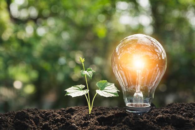 Ampoules avec un brillant. concept de technologie et de créativité avec des ampoules