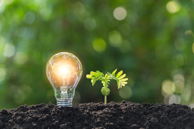 Ampoules avec un brillant. concept technologique et énergétique avec ampoules.