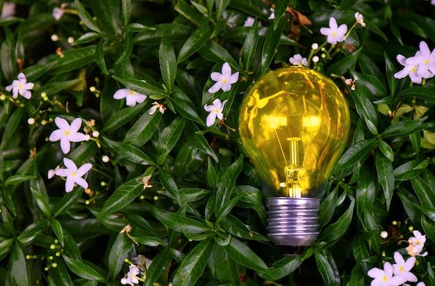 Ampoules lumineuses placées sur un fond de feuille verte. énergie naturelle.