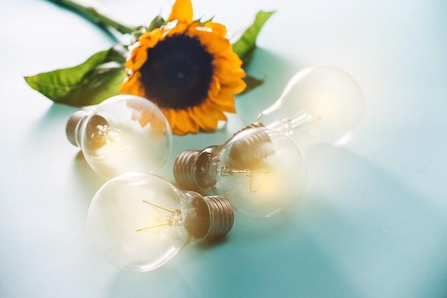 Ampoules avec tournesol sur fond bleu