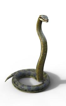 Anaconda, boa constrictor le plus gros serpent venimeux du monde isolé sur fond blanc