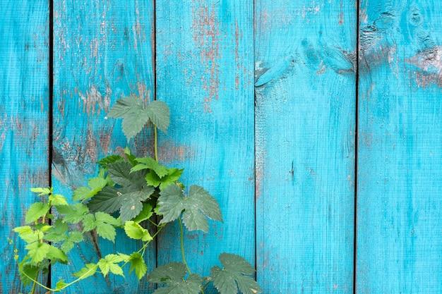 Ancienne clôture en bois peinture bleue texture du panneau de pelage. contexte.