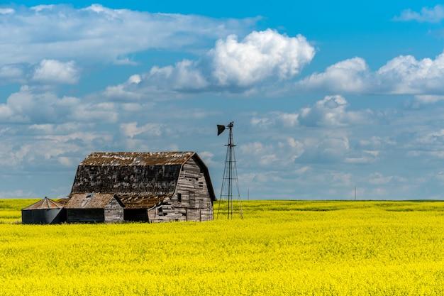 Ancienne grange, bacs et moulin à vent dans un champ de canola en saskatchewan, au canada, sous un ciel bleu