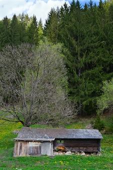 Ancienne maison en bois de pinède