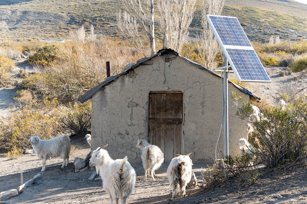 Ancienne maison gaucho avec panneaux solaires et chèvres autour.