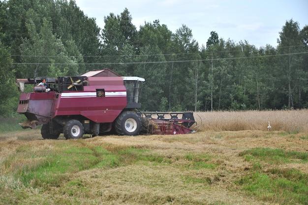 Ancienne moissonneuse rurale récolte du blé mûr sur le terrain.
