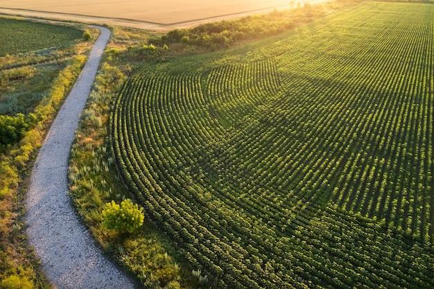 Ancienne route en pierre près de la plantation et des champs. champ au lever du soleil