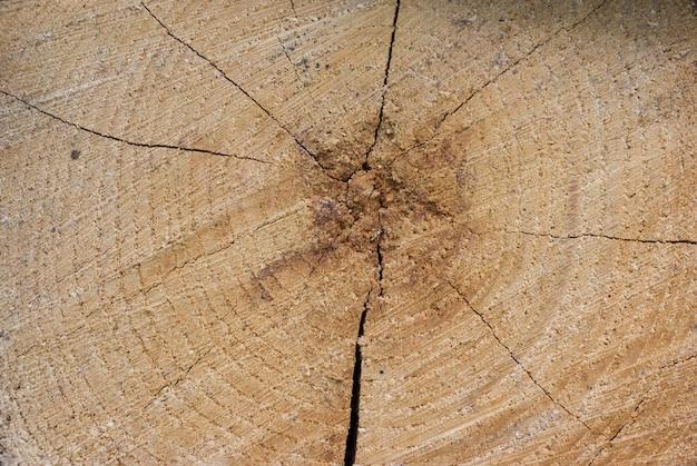 Ancienne section d'arbre fissuré