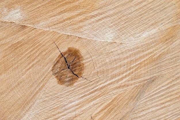 Ancienne surface de coupe de bouleau en bois. tons brun foncé et orange chaud détaillés d'un tronc ou d'une souche abattue