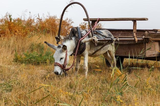 Un âne attelé à une charrette en fer se dresse dans un pré et mange de l'herbe