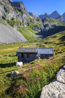 Âne dans un champ et bergerie, pralognan la vanoise, alpes françaises