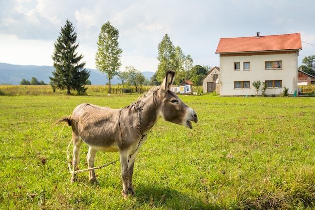 Âne paissant dans un ranch