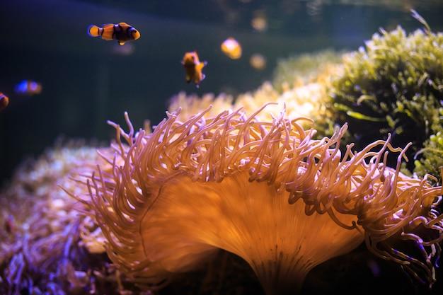 Anémone avec poisson-clown, thaïlande sous l'eau