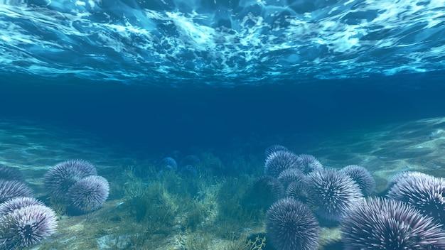 Anémones sous l'eau