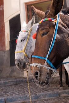 Ânes, à, Bride Coloré, Dans, Santorini, Grèce Photo Premium