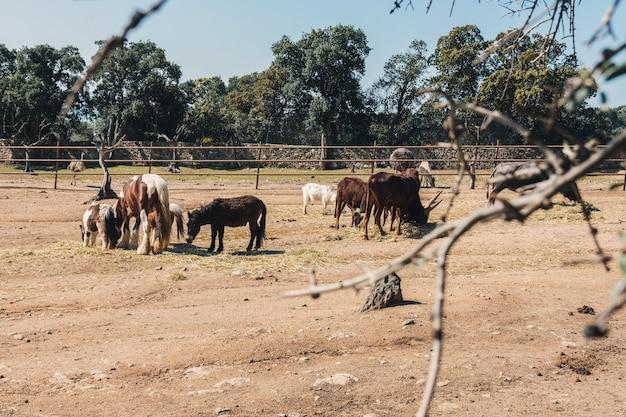Ânes, chevaux et autres animaux de la ferme dans un corral