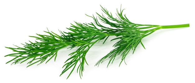 Aneth vert frais isolé sur fond blanc. macro.