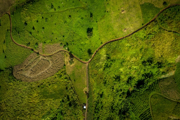 Angle élevé au-dessus des images de vue et des chemins dans les zones agricoles