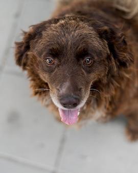 Angle élevé de gros chien de sauvetage à fourrure au refuge d'adoption