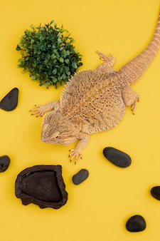 Angle élevé d'iguane avec végétation et rochers