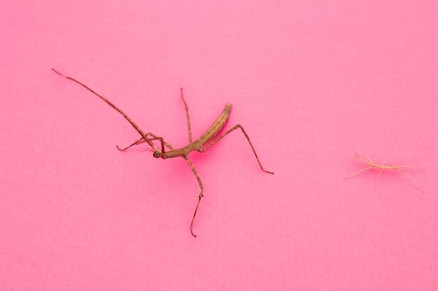 Angle élevé d'insecte mante à la recherche étrange