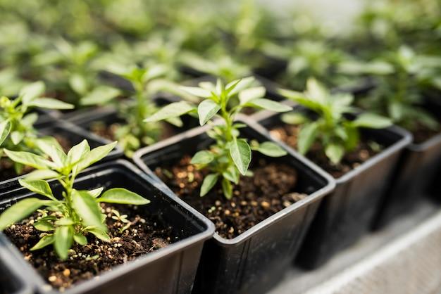 Angle élevé de plantes dans des pots noirs