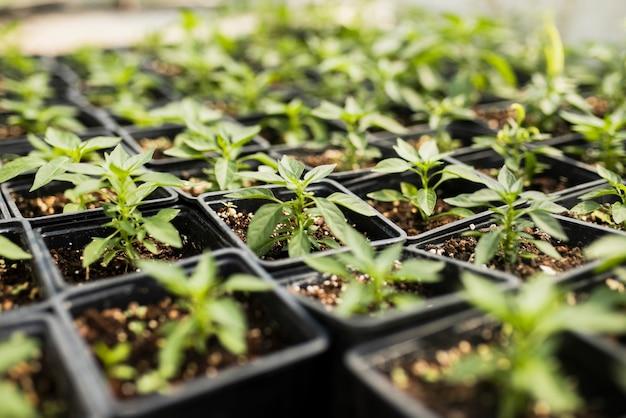 Angle élevé de plantes en serre