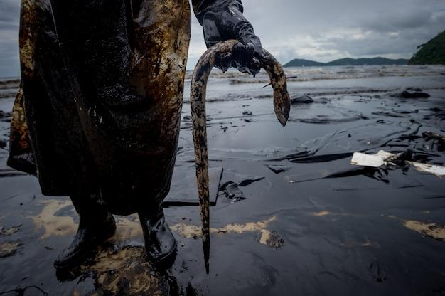 Anguille tuée par la pollution par les hydrocarbures sur la plage
