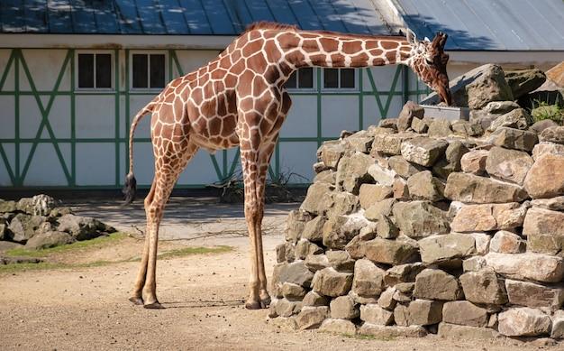 Animal au zoo d'amsterdam