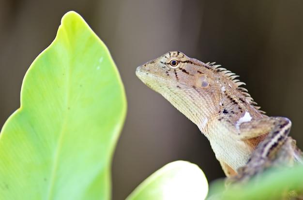 Animal dragon
