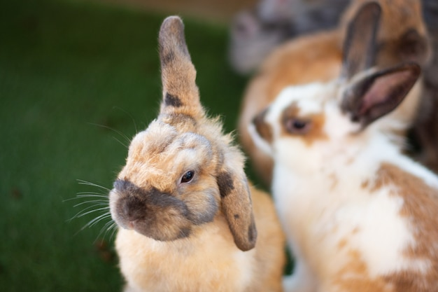 Animal mammifère deux lapins