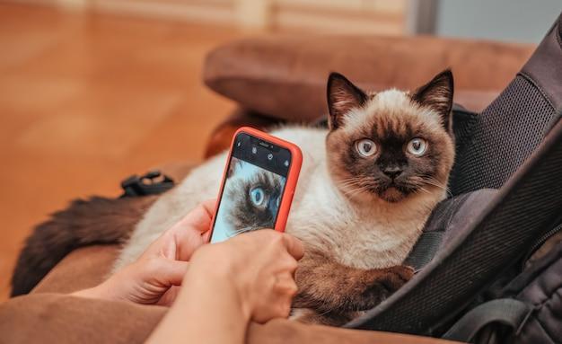 Animaux de compagnie, matin, confort, repos et concept de personnes - heureux jeune femme photographie ici chat à la maison. chat écossais. couleur chocolat bonjour