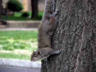 Animaux écureuil