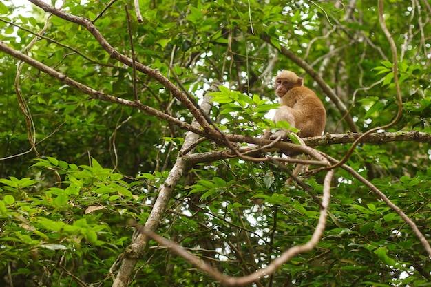 Animaux et faune. petit singe ou macaque est assis sur une branche d'arbre dans la forêt tropicale
