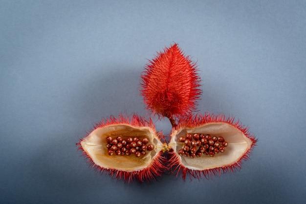 Annatto (rocou). ses graines sont utilisées comme colorant alimentaire naturel, photographiées en studio avec un fond neutre.