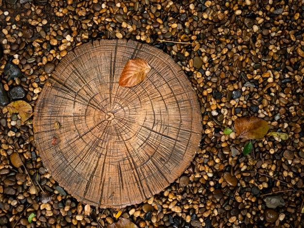 Anneau annuel texturé de l'âge des arbres en bois sur la croissance des plantes dans le gravier noir