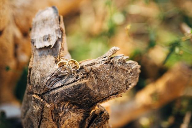 Anneaux de mariage sur une écorce d'arbre