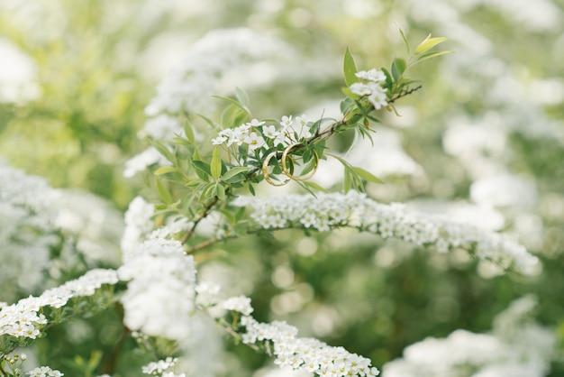 Les anneaux de mariage en or de la mariée et du marié pendent sur une branche avec des fleurs blanches