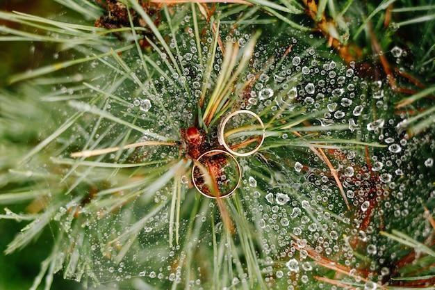 Les anneaux de mariage se trouvent sur un arbre dans des gouttes de rosée