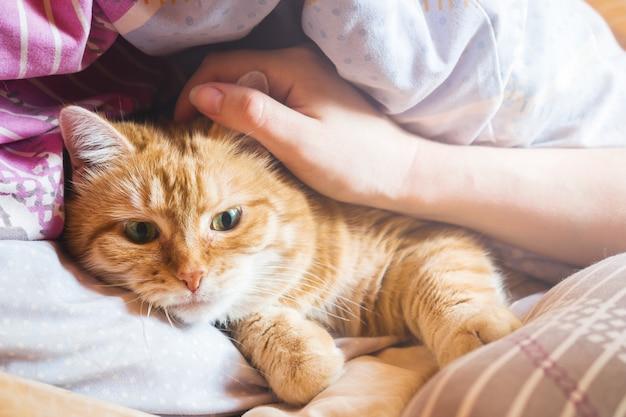 Des années de chat au gingembre sur le lit dans une couverture.