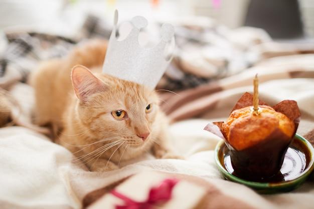 Anniversaire de chat