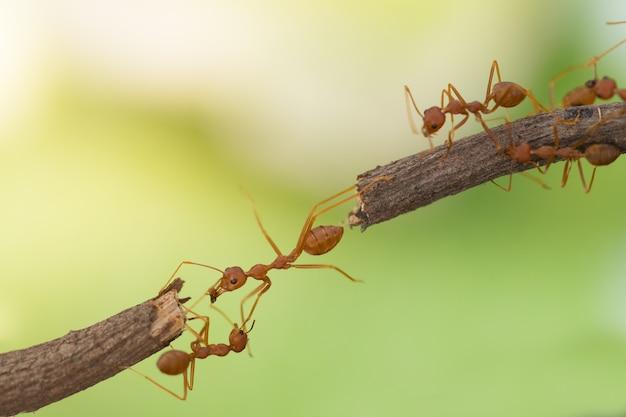 Ant action debout.ant équipe d'unité de pont