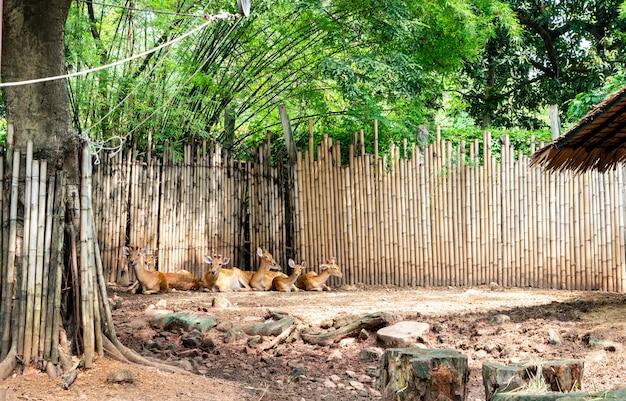 Antilope dans le zoo