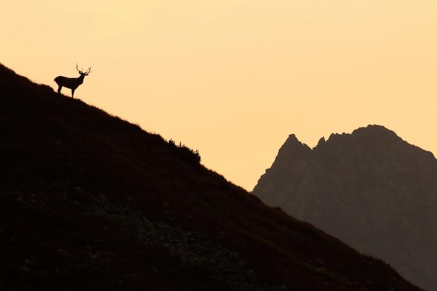 Aperçu du cerf rouge debout sur les montagnes au coucher du soleil