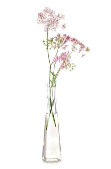 Apiaceae en éprouvette