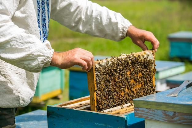 L'apiculteur Considère Les Abeilles En Nid D'abeille Avec Une Loupe. Photo Premium