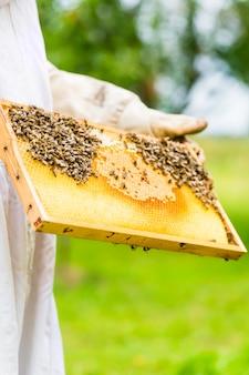 Apiculteur contrôlant beeyard et les abeilles