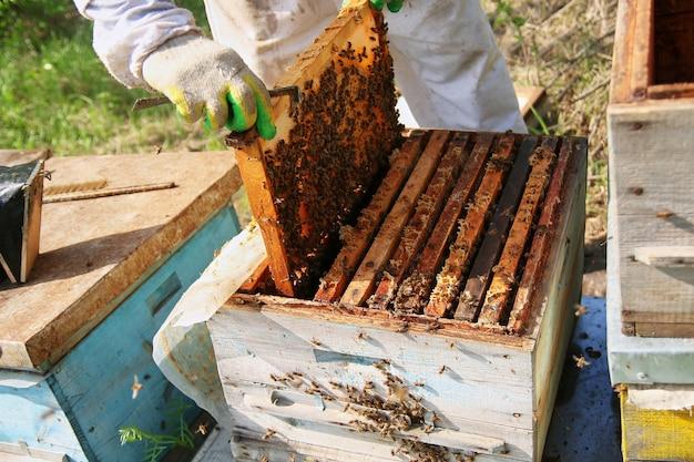 Apiculteur en gants et costume d'apiculteur vérifie les ruches avec les abeilles, se prépare à la collecte du miel, s'occupe des cadres avec des nids d'abeilles